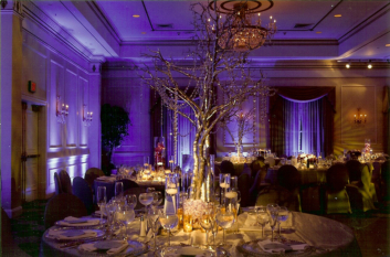 Purple - branch